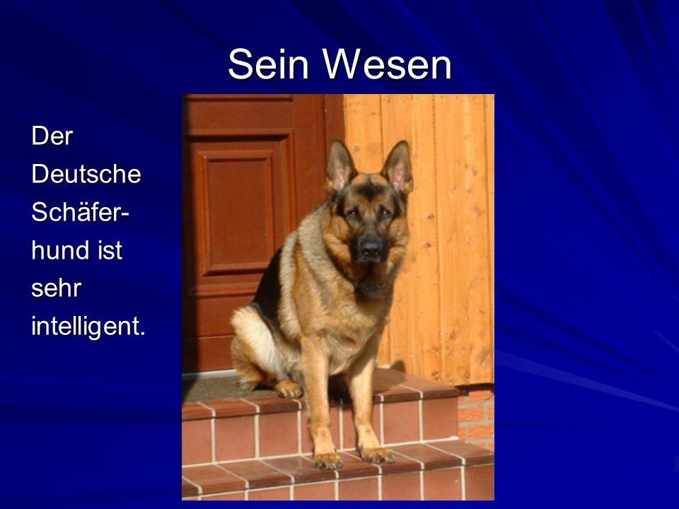 Seine Herkunft Der Hund von Max Emil Friedrich von Stephanitz ist der Stammvater der Deutschen Schäferhunde.