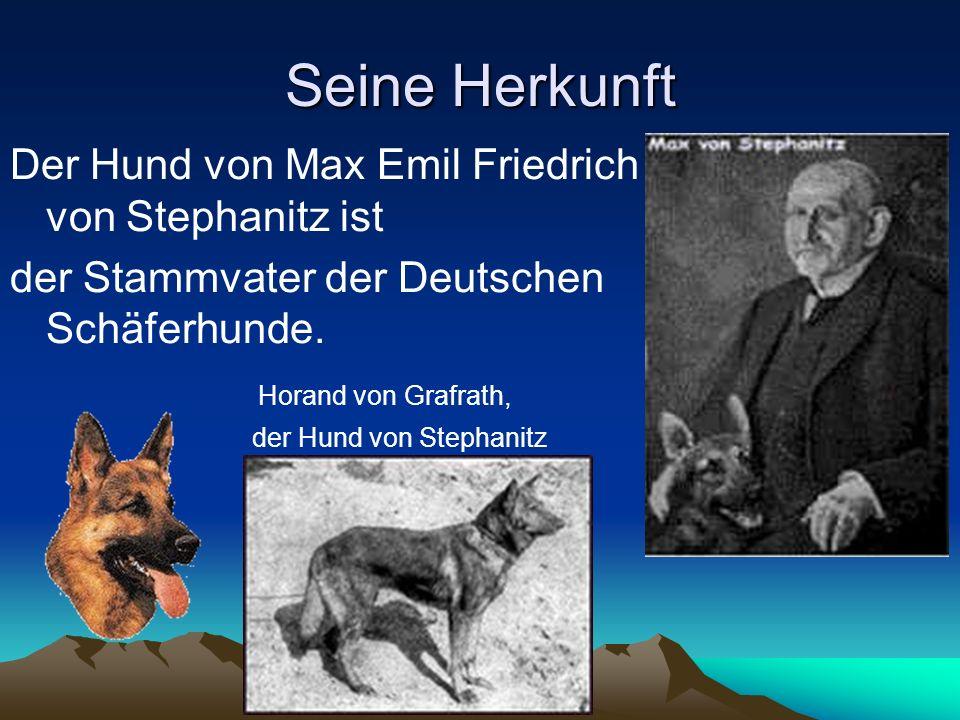 Berühmte Deutsche Schäferhunde Der Deutsche Schäferhund,, REX´´ aus der Fehrnsehserie,,Komisar Rex´´ ist der zweitberühmteste Hund der Welt.