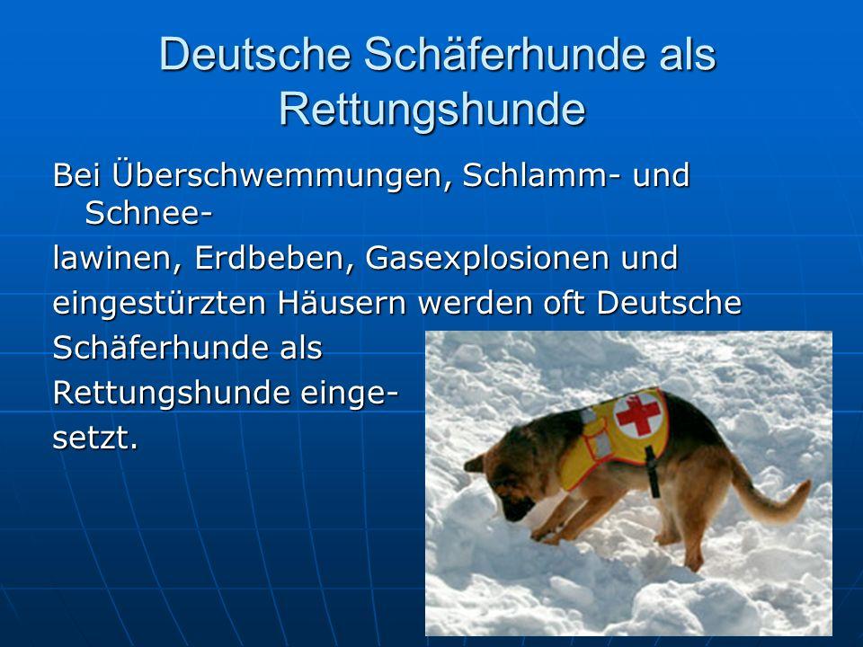 Deutsche Schäferhunde als Rettungshunde Deutsche Schäferhunde als Rettungshunde Bei Überschwemmungen, Schlamm- und Schnee- lawinen, Erdbeben, Gasexplosionen und eingestürzten Häusern werden oft Deutsche Schäferhunde als Rettungshunde einge- setzt.