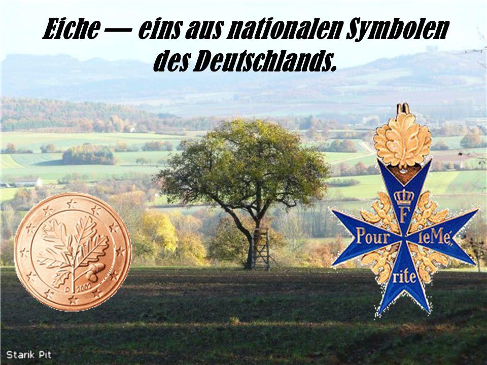 Eiche eins aus nationalen Symbolen des Deutschlands.