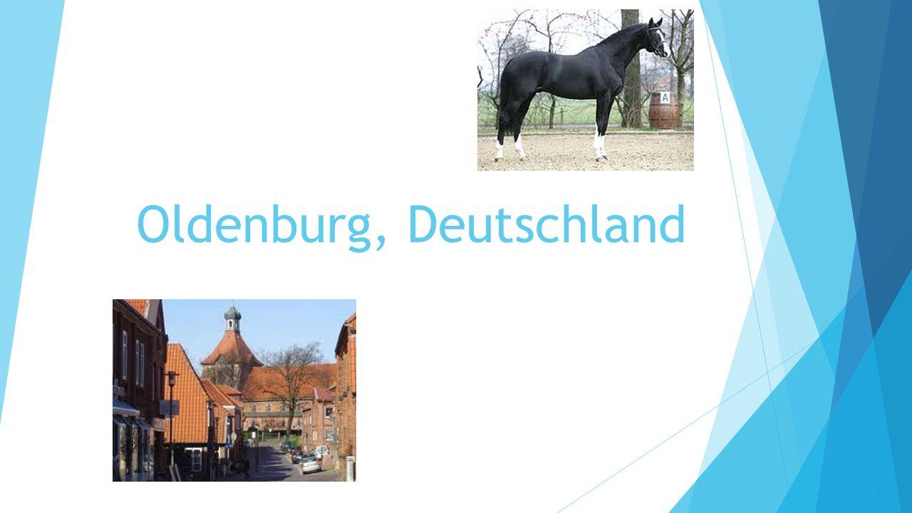Dreissigjähriger Krieg!.Oldenburg hat gemeiden. Geschenkspferd.