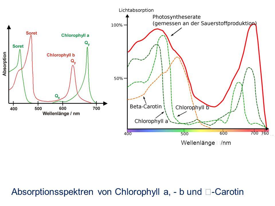 Absorptionsspektren von Chlorophyll a, - b und -Carotin Wellenlänge /nm