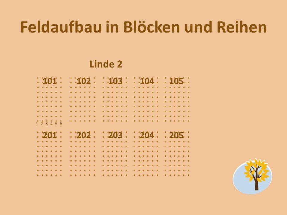 Feldaufbau in Blöcken und Reihen Linde 2 101102103104105 201202203204205 123456