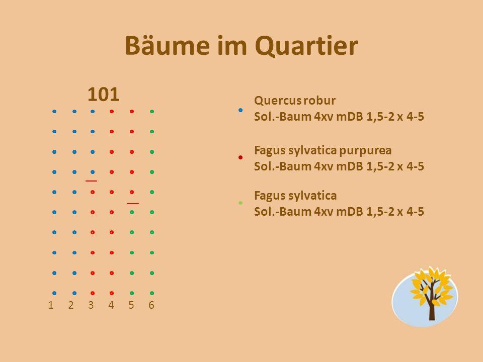 Bäume im Quartier 101 123456 Quercus robur Sol.-Baum 4xv mDB 1,5-2 x 4-5 Fagus sylvatica purpurea Sol.-Baum 4xv mDB 1,5-2 x 4-5 Fagus sylvatica Sol.-B