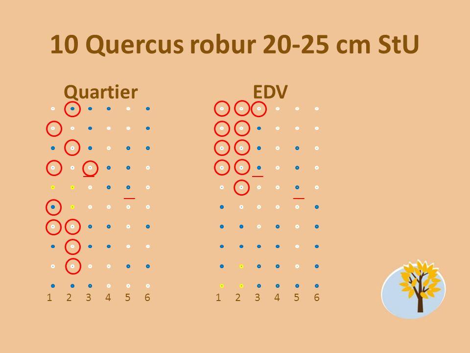 10 Quercus robur 20-25 cm StU Quartier 123456 EDV 123456