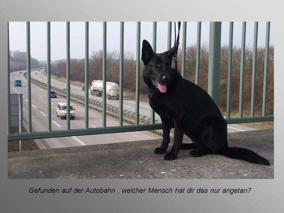 Gefunden auf der Autobahn, wenn der kleine Hund auch nicht weinen kann,