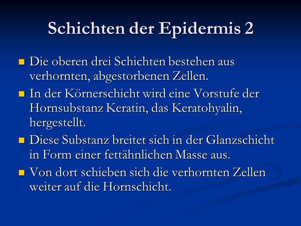 Schichten der Epidermis 2 Die oberen drei Schichten bestehen aus verhornten, abgestorbenen Zellen. Die oberen drei Schichten bestehen aus verhornten,