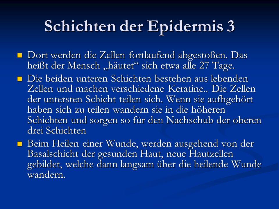 Schichten der Epidermis 3 Dort werden die Zellen fortlaufend abgestoßen. Das heißt der Mensch häutet sich etwa alle 27 Tage. Dort werden die Zellen fo