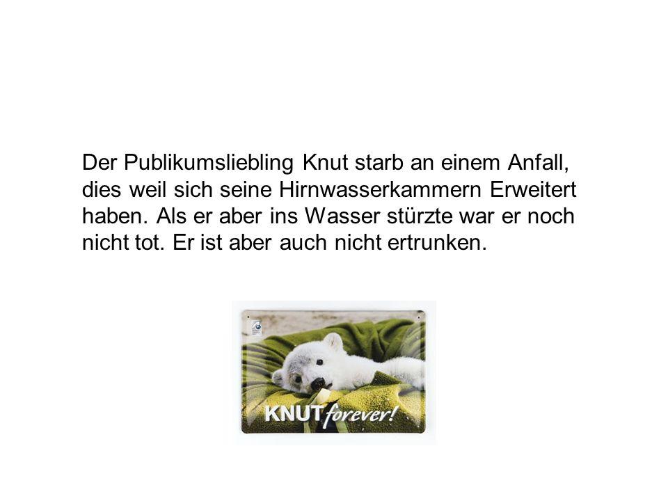 Der Publikumsliebling Knut starb an einem Anfall, dies weil sich seine Hirnwasserkammern Erweitert haben. Als er aber ins Wasser stürzte war er noch n