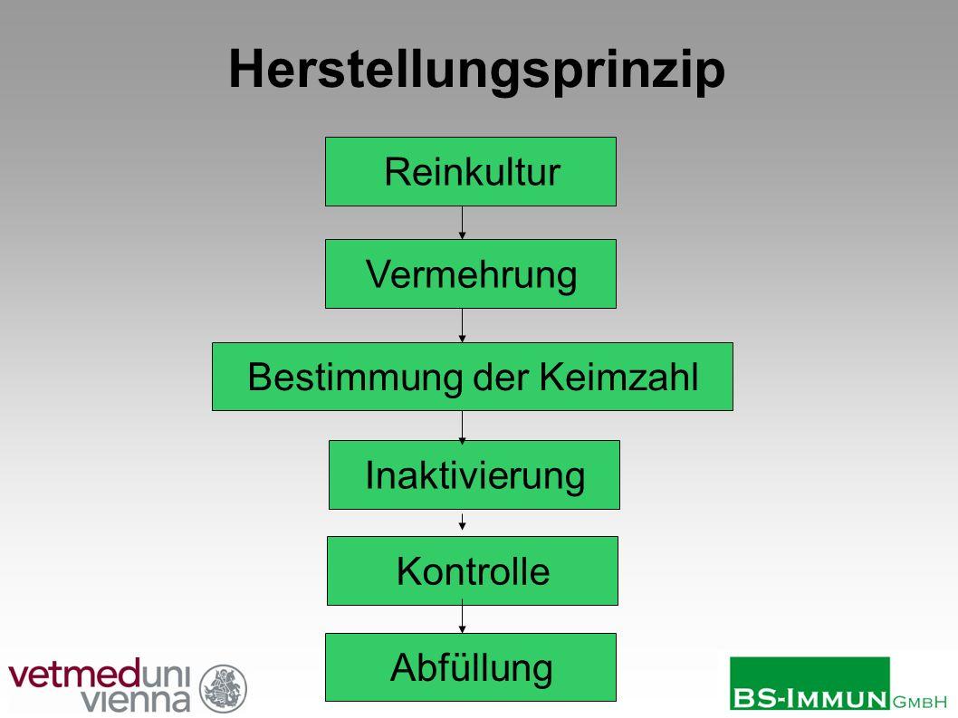 13 von 30 Herstellungsprinzip Kontrolle Inaktivierung Reinkultur Vermehrung Abfüllung Bestimmung der Keimzahl