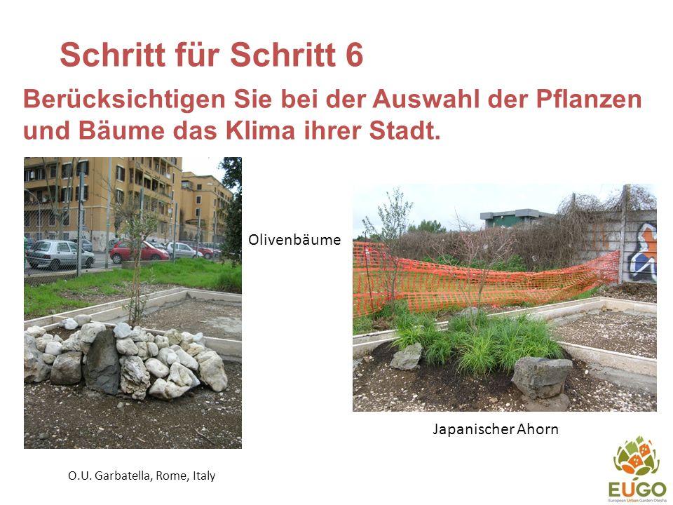 Schritt für Schritt 6 Berücksichtigen Sie bei der Auswahl der Pflanzen und Bäume das Klima ihrer Stadt.