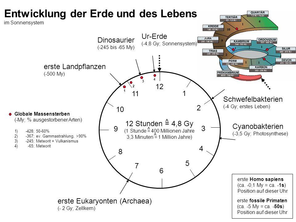 12 Stunden = 4,8 Gy (1 Stunde = 400 Millionen Jahre 3,3 Minuten = 1 Million Jahre) Ur-Erde (-4,8 Gy; Sonnensystem) Schwefelbakterien (-4 Gy; erstes Le
