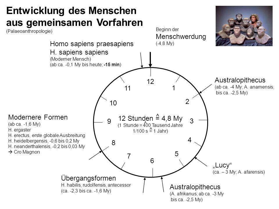 Entwicklung des Menschen aus gemeinsamen Vorfahren (Palaeoanthropologie) 12 Stunden = 4,8 My (1 Stunde = 400 Tausend Jahre 1/100 s = 1 Jahr) Homo sapi