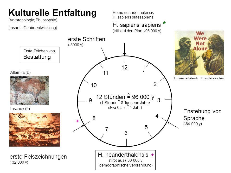 Kulturelle Entfaltung (Anthropologie; Philosophie) (rasante Gehirnentwicklung) 12 Stunden = 96 000 y (1 Stunde = 8 Tausend Jahre etwa 0,5 s = 1 Jahr)