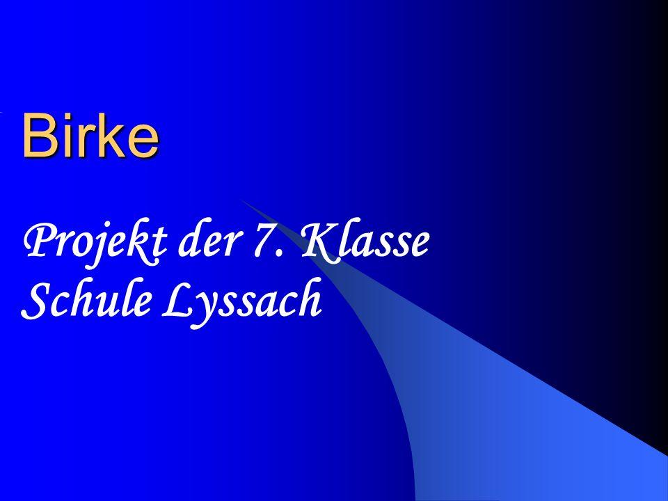 Birke Projekt der 7. Klasse Schule Lyssach