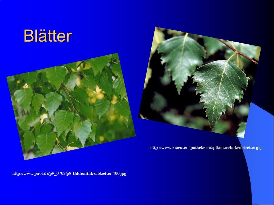 Blätter http://www.kraeuter-apotheke.net/pflanzen/birkenblaetter.jpg http://www.pirol.de/p9_0703/p9-Bilder/Birkenblaetter-400.jpg
