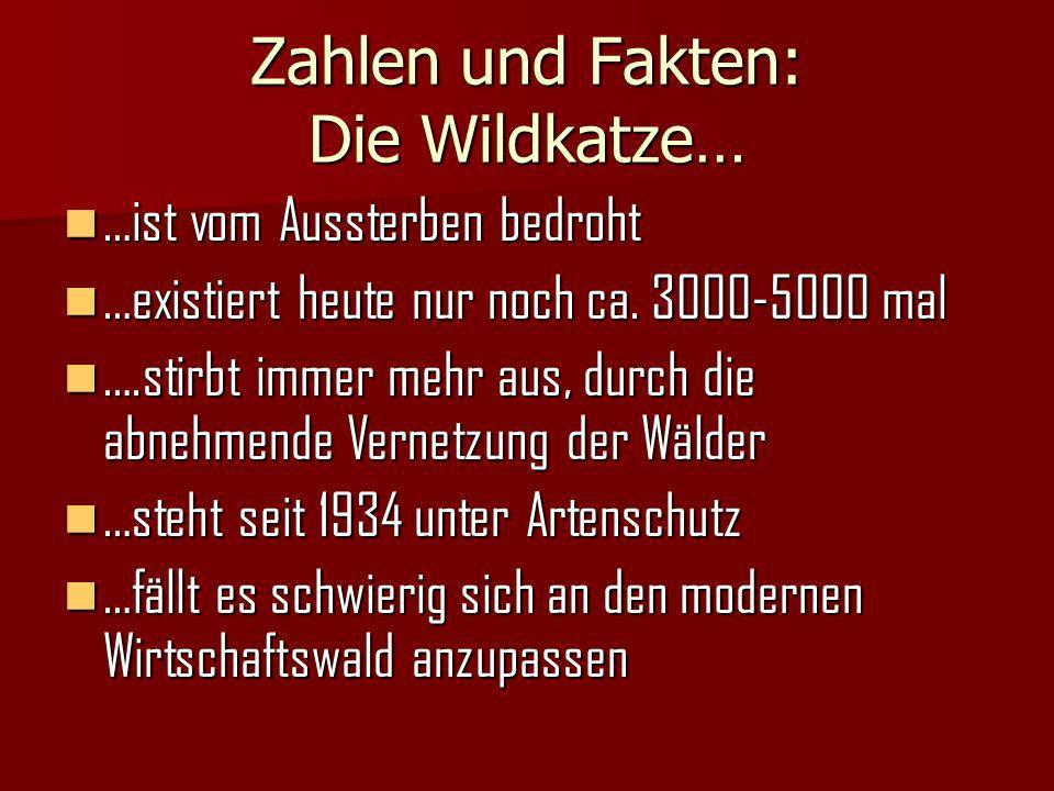 Zahlen und Fakten: Die Wildkatze… …ist vom Aussterben bedroht …ist vom Aussterben bedroht …existiert heute nur noch ca.