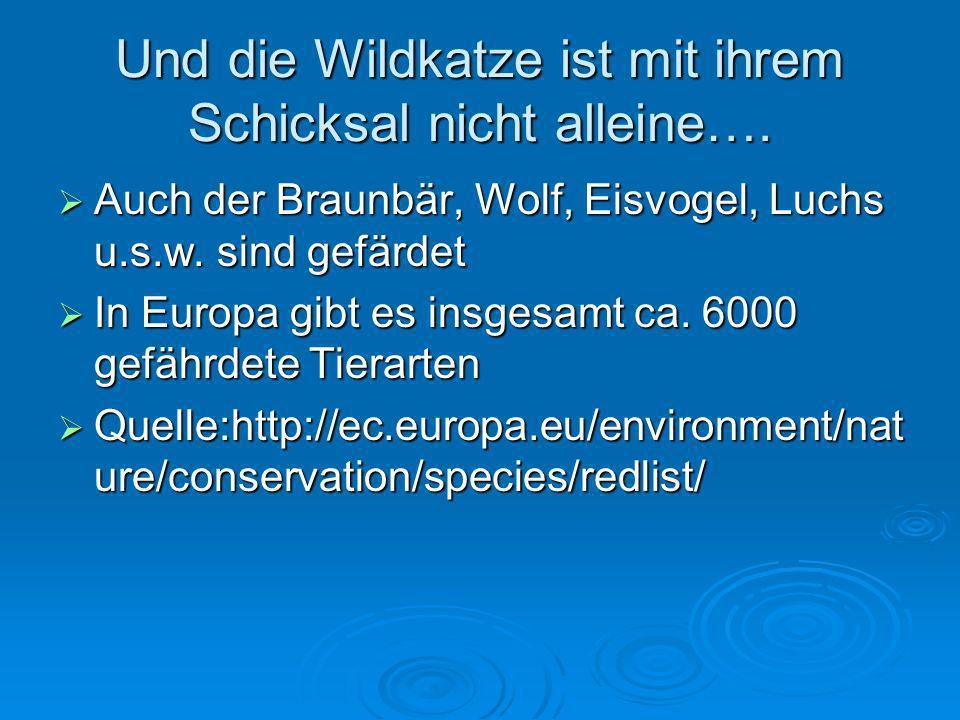 Der BUND Der BUND versucht seit 2004 mit Hilfe von Landesbehörden, Verbänden und Landnutzern, den Korridor Hainich und den Thüringer Wald zu verknüpfen, damit die Wildkatzen in diesen Gebieten zwischen diesen beiden wichtigen Lebensräumen dieser Art zu wechseln.