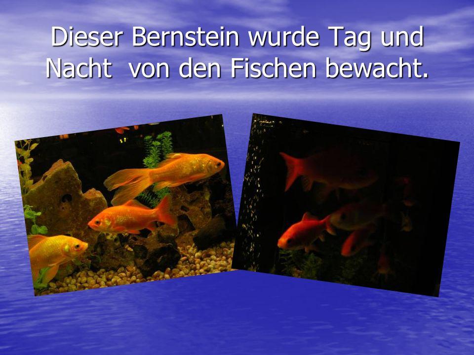 Dieser Bernstein wurde Tag und Nacht von den Fischen bewacht.