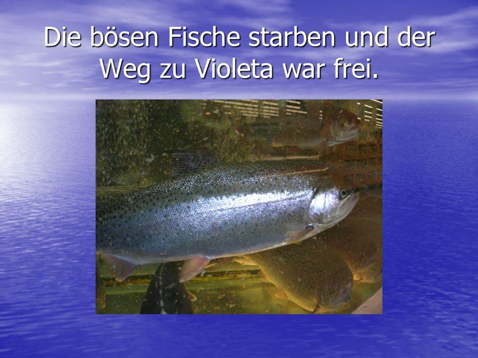 Die bösen Fische starben und der Weg zu Violeta war frei.