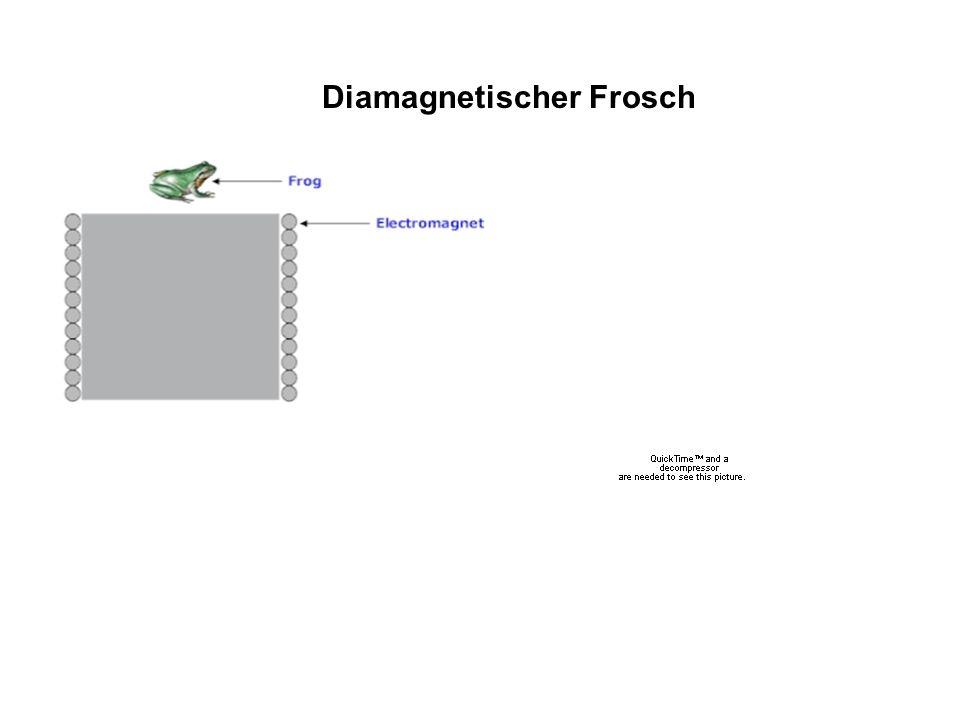 Diamagnetischer Frosch
