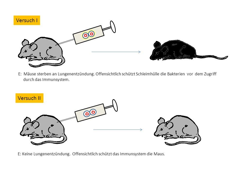 Versuch I E: Mäuse sterben an Lungenentzündung.
