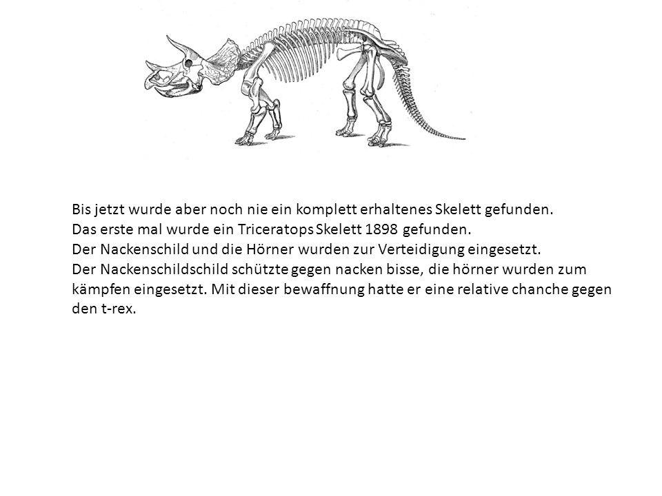 Das sind einige Grundinformationen: Länge:9Meter Gewicht:6-12 Tonnen Höchst geschwindgkeit: 40 KM/H Nahrung : Krautige pflanzen; Palmen Feinde: T-rex, die Zeit Name bedeutet :Dreihorngesicht War einer der letzten Dinosaurier in der Kreidezeit Skelett: robust gebaut, bestand aus röhren-knochen, Informationen: der Triceratops war groß und wuchtig gebaut.