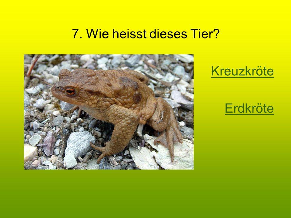 7. Wie heisst dieses Tier? Kreuzkröte Erdkröte