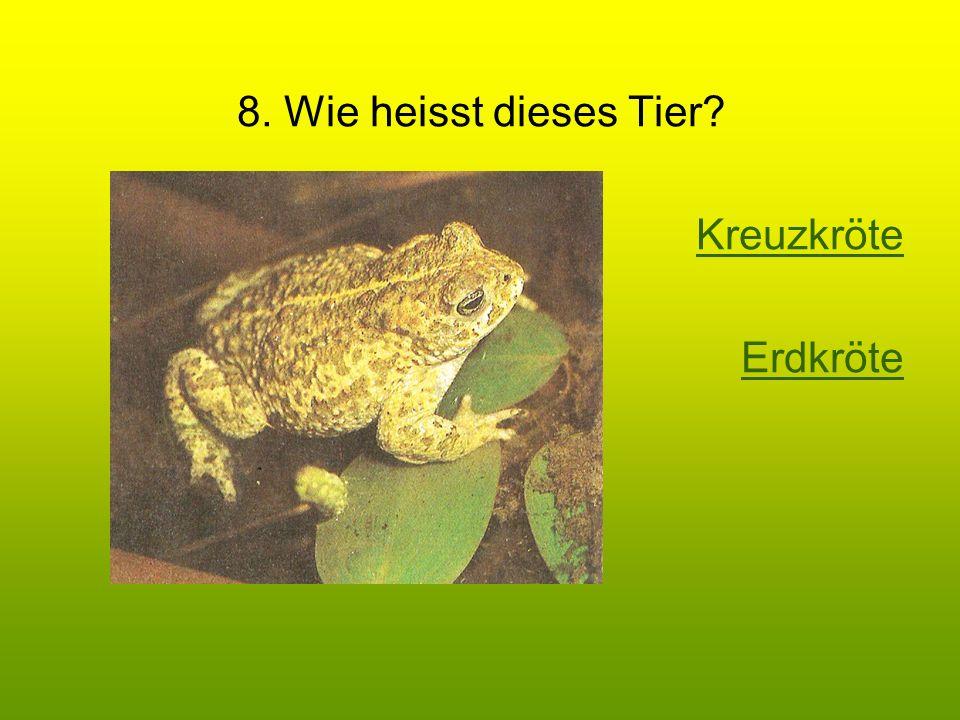 8. Wie heisst dieses Tier? Kreuzkröte Erdkröte