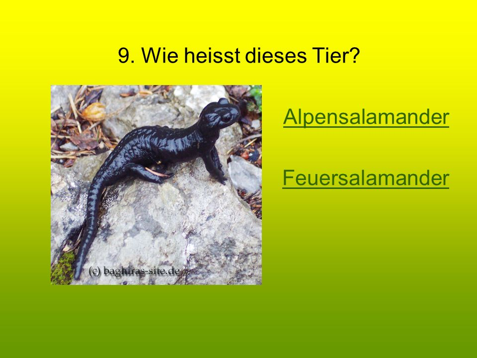 9. Wie heisst dieses Tier? Alpensalamander Feuersalamander