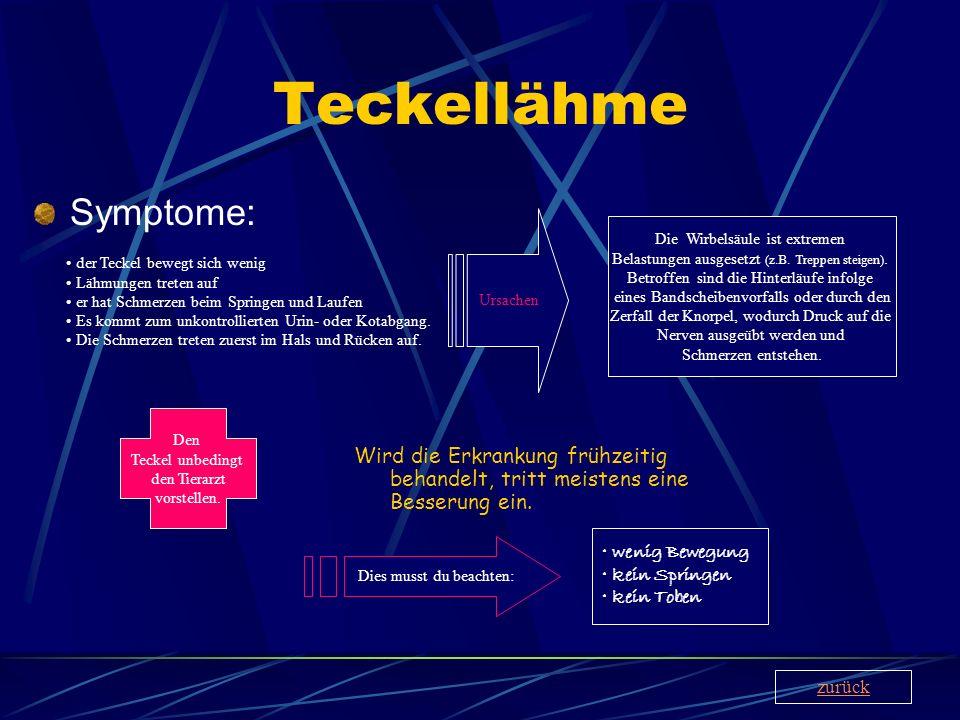 Teckellähme Symptome: Wird die Erkrankung frühzeitig behandelt, tritt meistens eine Besserung ein. der Teckel bewegt sich wenig Lähmungen treten auf e