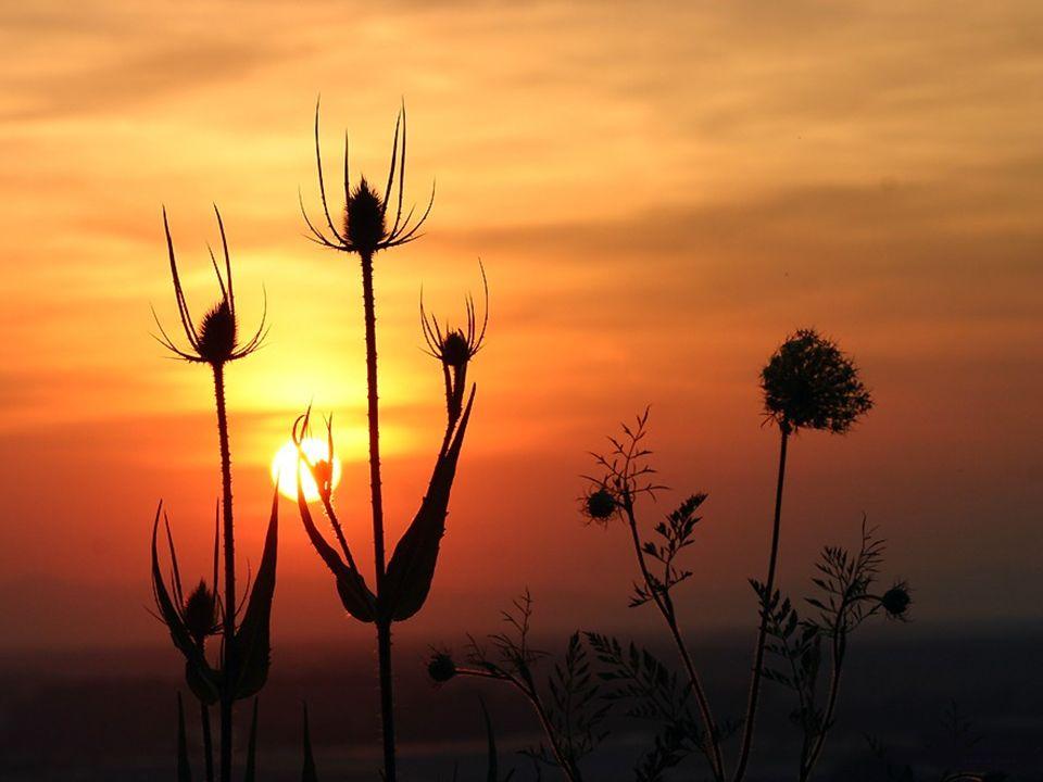 Ich fand eine Feldblume, bewunderte ihre Sch ö nheit und Vollendung in allen Teilen und rief aus: Aber alles dieses, in ihr und tausenden ihresgleiche