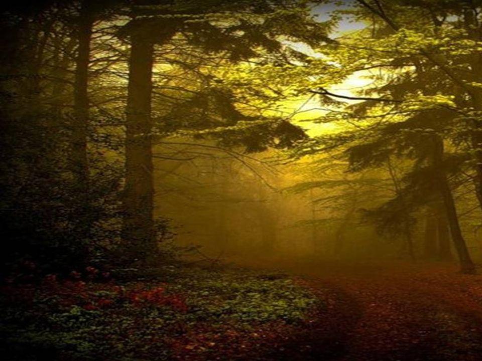Die Natur übt ein heimliches Gericht; leise und langm ü tig, aber unentrinnbar.