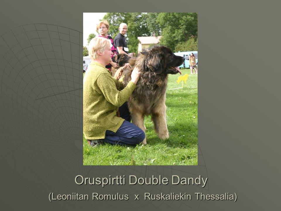 Oruspirtti Double Dandy (Leoniitan Romulus x Ruskaliekin Thessalia)