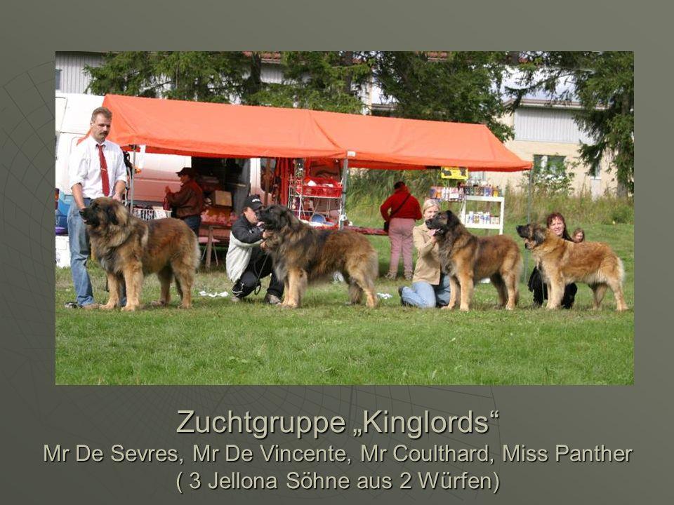 Zuchtgruppe Kinglords Mr De Sevres, Mr De Vincente, Mr Coulthard, Miss Panther ( 3 Jellona Söhne aus 2 Würfen)