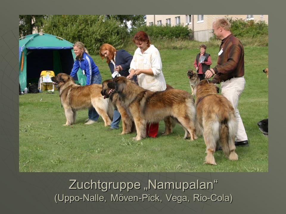 Zuchtgruppe Namupalan (Uppo-Nalle, Möven-Pick, Vega, Rio-Cola)