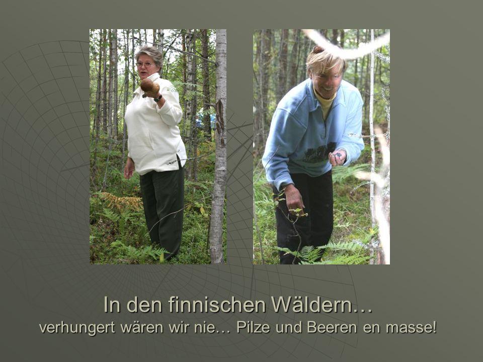 In den finnischen Wäldern… verhungert wären wir nie… Pilze und Beeren en masse!