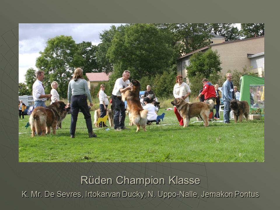 Rüden Champion Klasse K. Mr. De Sevres, Irtokarvan Ducky, N. Uppo-Nalle, Jemakon Pontus