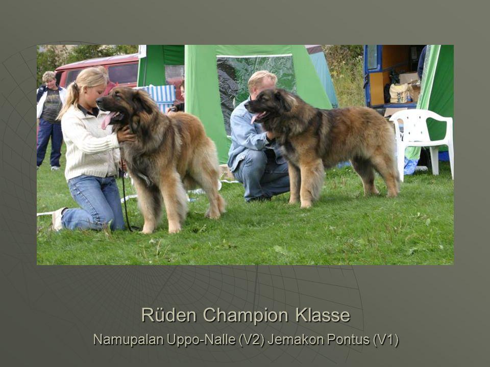 Rüden Champion Klasse Namupalan Uppo-Nalle (V2) Jemakon Pontus (V1)
