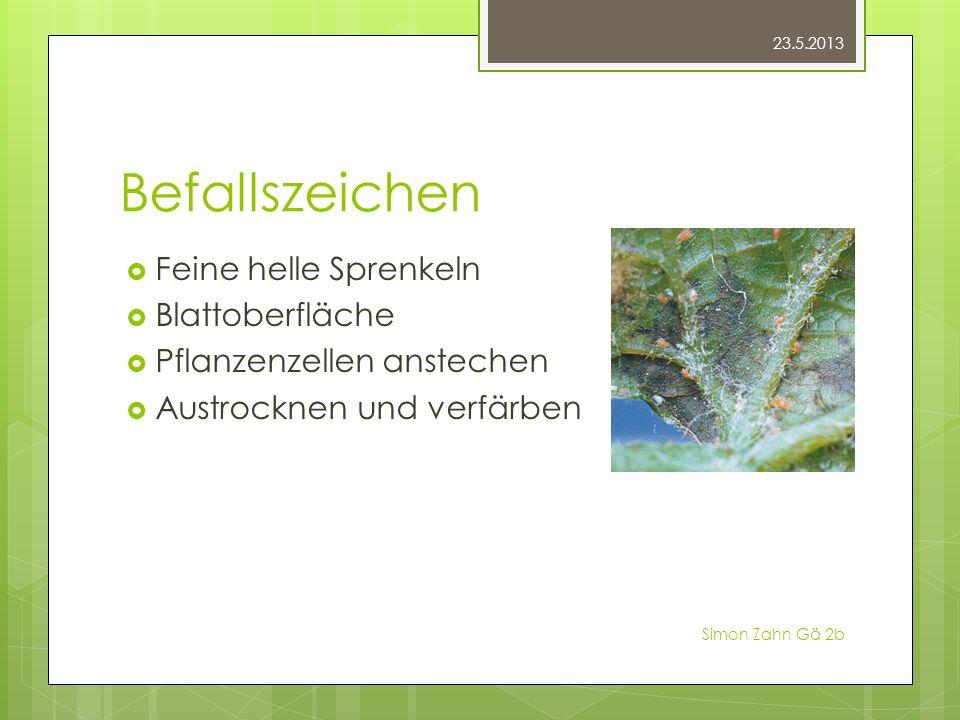 Befallszeichen Feine helle Sprenkeln Blattoberfläche Pflanzenzellen anstechen Austrocknen und verfärben 23.5.2013 Simon Zahn Gä 2b