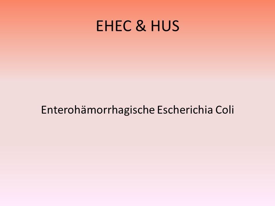 EHEC & HUS Enterohämorrhagische Escherichia Coli