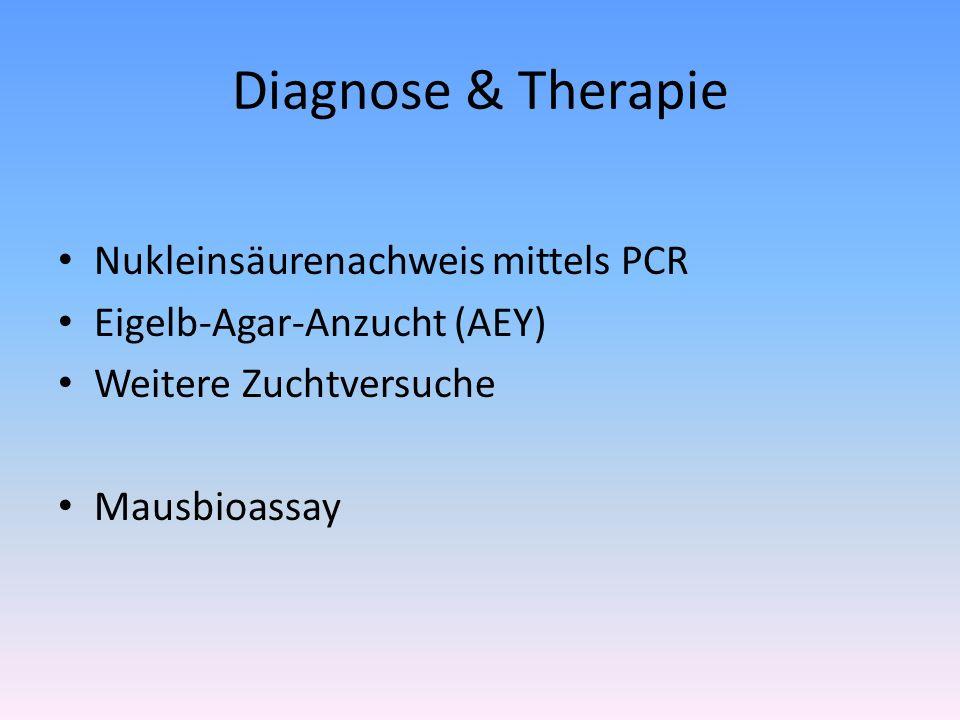 Diagnose & Therapie Nukleinsäurenachweis mittels PCR Eigelb-Agar-Anzucht (AEY) Weitere Zuchtversuche Mausbioassay