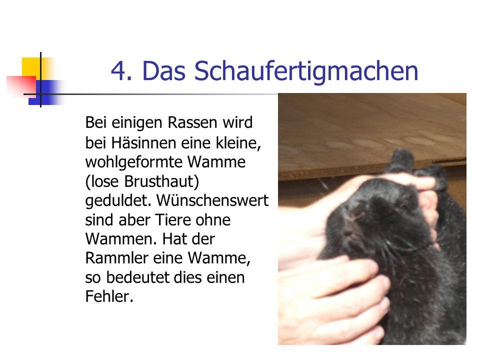 4. Das Schaufertigmachen Bei einigen Rassen wird bei Häsinnen eine kleine, wohlgeformte Wamme (lose Brusthaut) geduldet. Wünschenswert sind aber Tiere