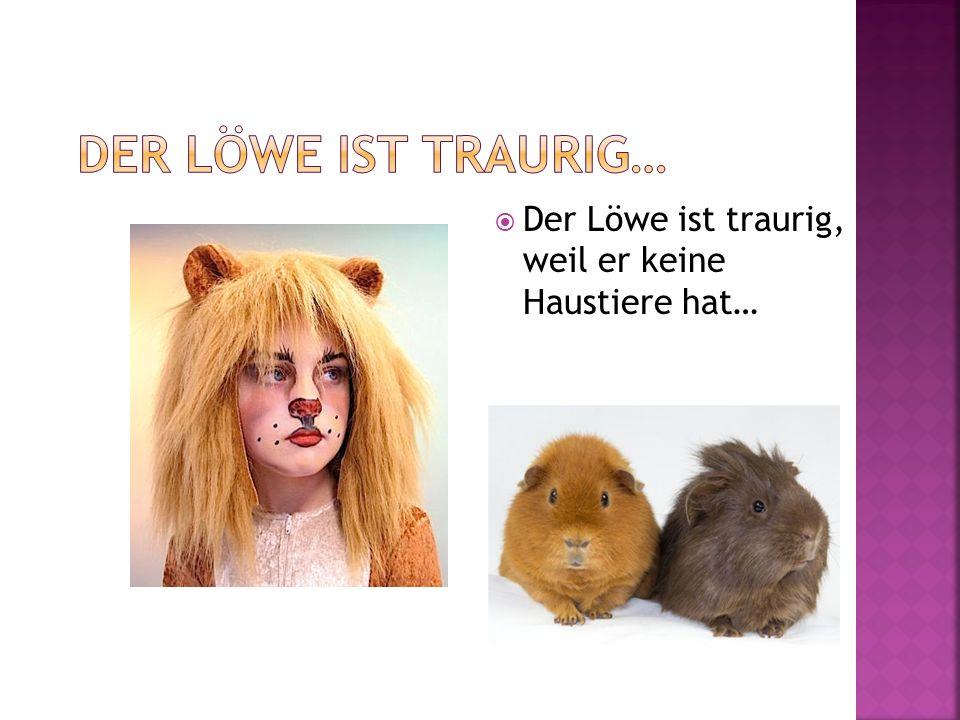 Der Löwe ist traurig, weil er keine Haustiere hat…