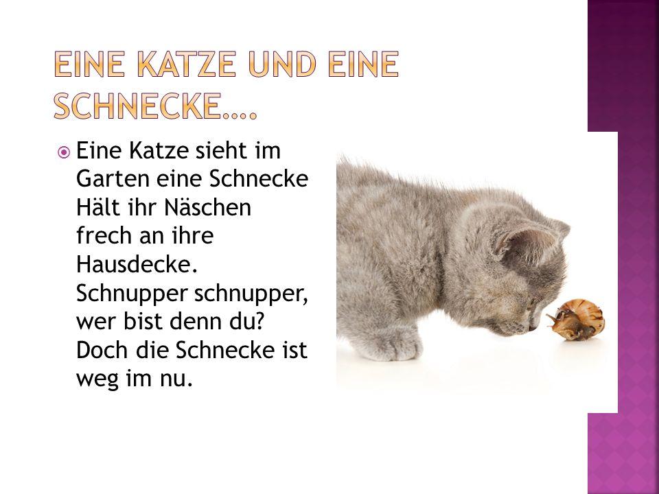Eine Katze sieht im Garten eine Schnecke Hält ihr Näschen frech an ihre Hausdecke. Schnupper schnupper, wer bist denn du? Doch die Schnecke ist weg im