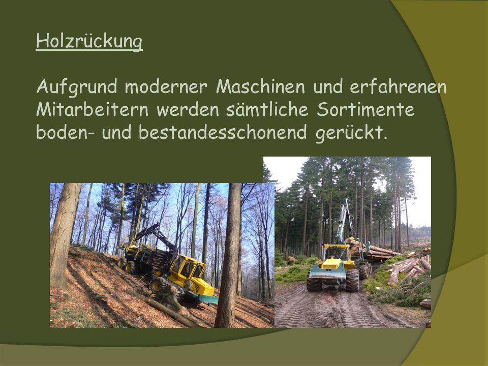 Holzrückung Aufgrund moderner Maschinen und erfahrenen Mitarbeitern werden sämtliche Sortimente boden- und bestandesschonend gerückt.