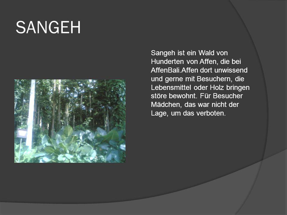 SANGEH Sangeh ist ein Wald von Hunderten von Affen, die bei AffenBali.Affen dort unwissend und gerne mit Besuchern, die Lebensmittel oder Holz bringen störe bewohnt.