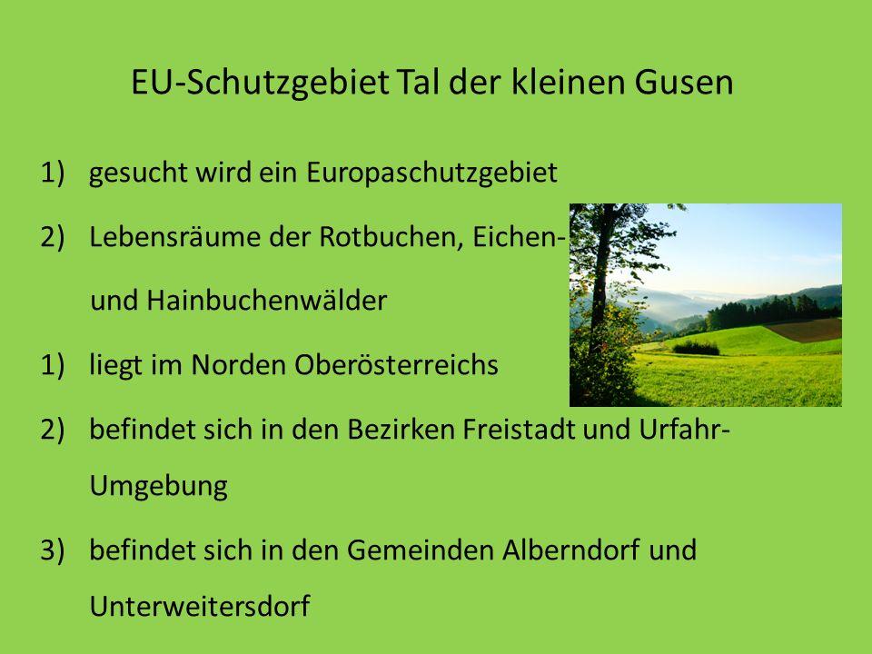 EU-Schutzgebiet Tal der kleinen Gusen 1)gesucht wird ein Europaschutzgebiet 2)Lebensräume der Rotbuchen, Eichen- und Hainbuchenwälder 1)liegt im Norde