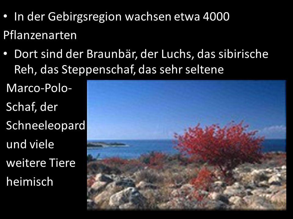 In der Gebirgsregion wachsen etwa 4000 Pflanzenarten Dort sind der Braunbär, der Luchs, das sibirische Reh, das Steppenschaf, das sehr seltene Marco-P