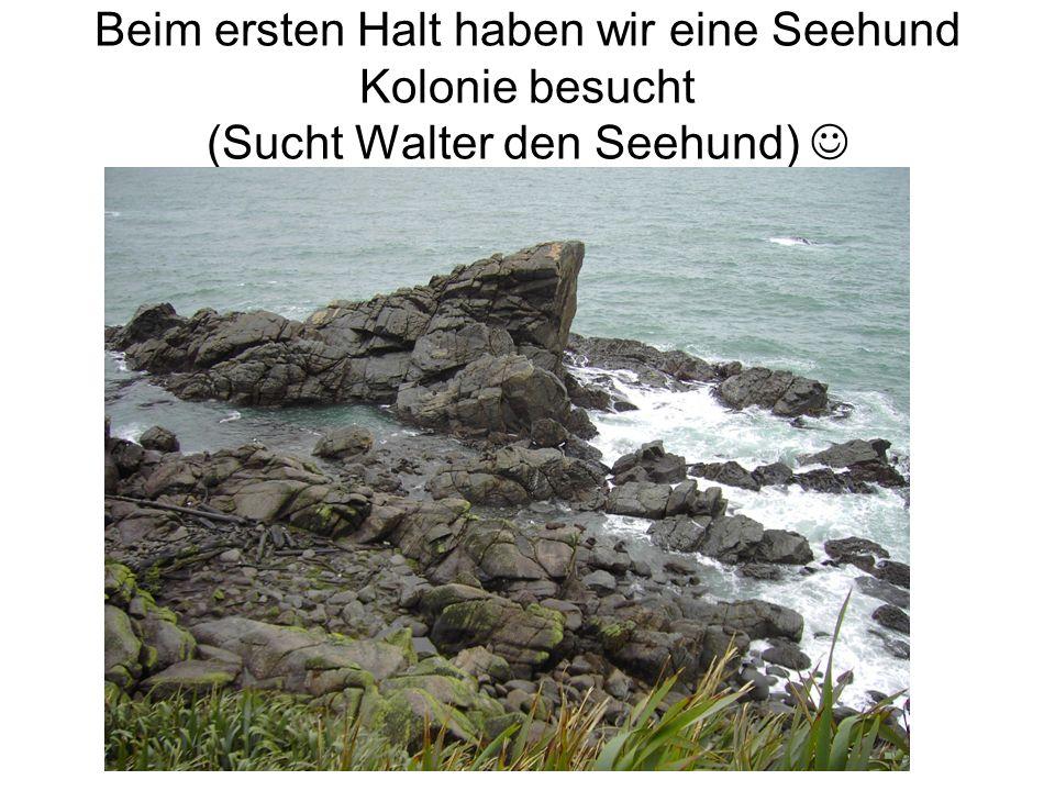 Beim ersten Halt haben wir eine Seehund Kolonie besucht (Sucht Walter den Seehund)